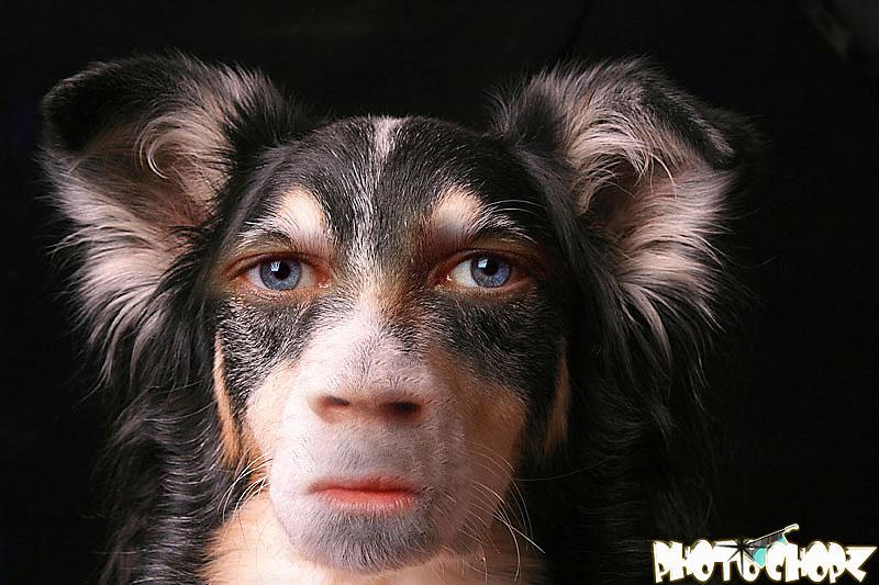 Don Burleson Blog Making Your Dog Look Human